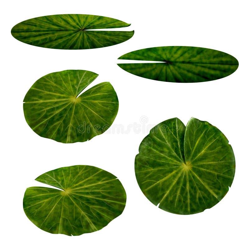 Φύλλα κρίνων νερού καθορισμένα ελεύθερη απεικόνιση δικαιώματος