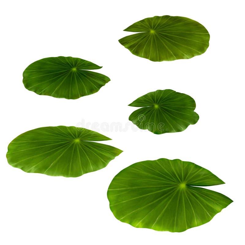 Φύλλα κρίνων νερού στοκ εικόνες