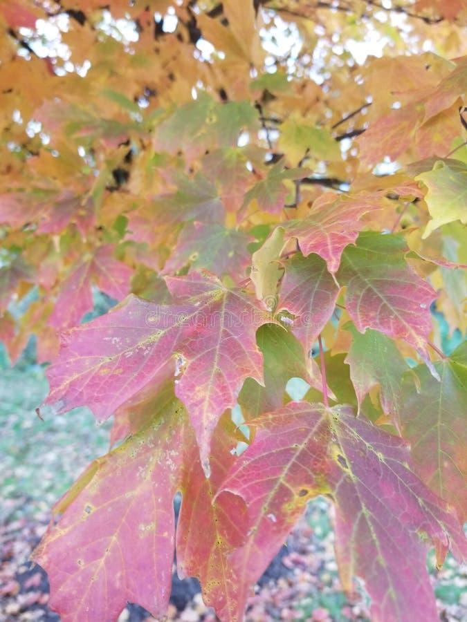 Φύλλα με τα διαφορετικά χρώματα στοκ φωτογραφίες