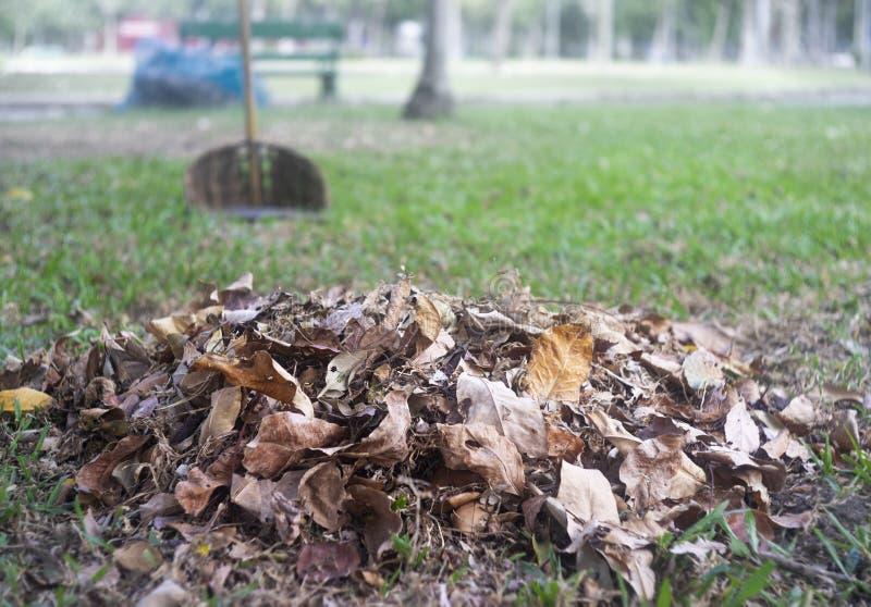 Φύλλα με τον πράσινο τομέα χλόης στο υπόβαθρο στοκ εικόνες