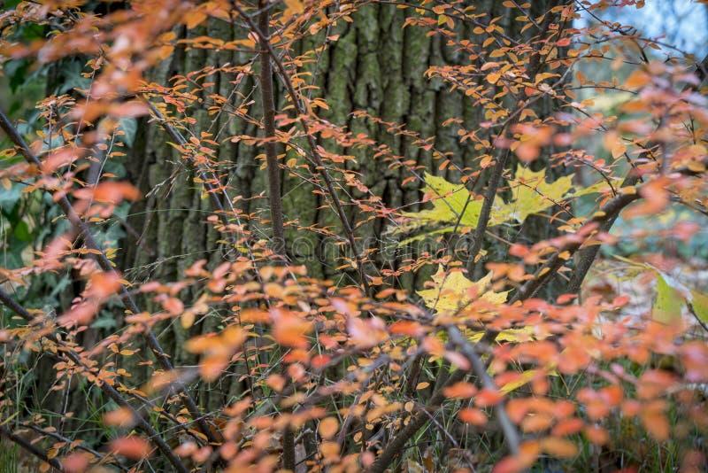 Φύλλα μπροστά από έναν κορμό δέντρων στοκ εικόνες με δικαίωμα ελεύθερης χρήσης