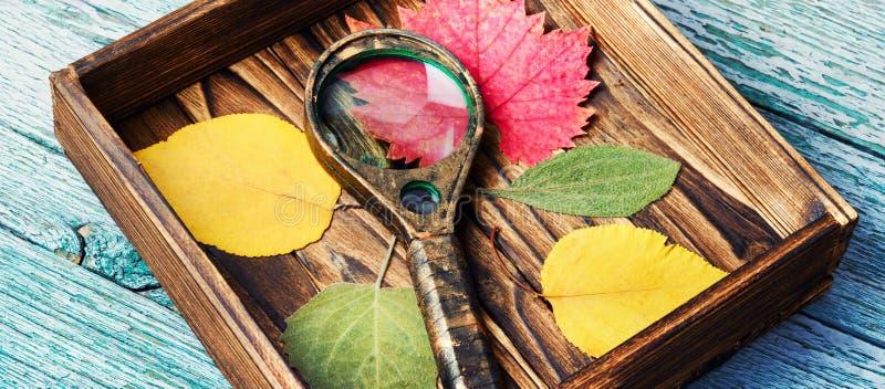 Φύλλα Οκτωβρίου για το ερμπάριο στοκ εικόνα