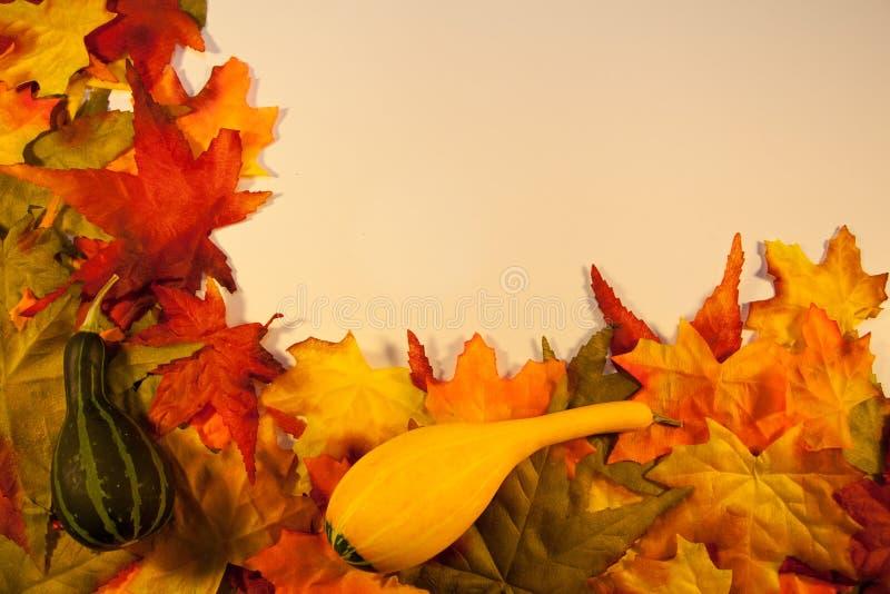 Φύλλα πτώσης με τις κολοκύθες στοκ φωτογραφία