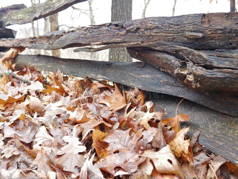 Φύλλα πτώσης πίσω από έναν ξύλινο φράκτη στοκ φωτογραφία