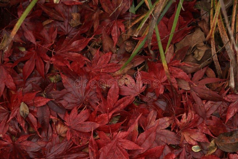 Φύλλα πτώσης σε έναν σωρό στοκ φωτογραφία με δικαίωμα ελεύθερης χρήσης