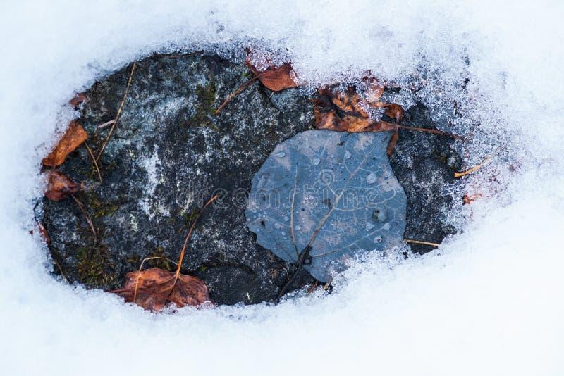 Φύλλα πτώσης στο βράχο κατά τη διάρκεια του λειωμένου μετάλλου χιονιού στοκ φωτογραφία με δικαίωμα ελεύθερης χρήσης