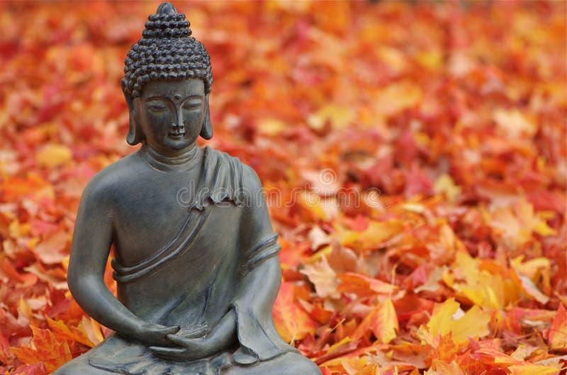 φύλλα πτώσης του Βούδα στοκ εικόνες με δικαίωμα ελεύθερης χρήσης