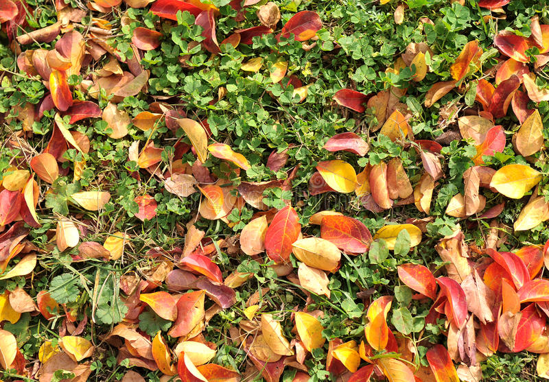 φύλλα πτώσης στοκ φωτογραφία