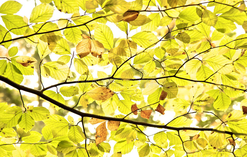 Download φύλλα πτώσης στοκ εικόνα. εικόνα από πάρκο, ανασκόπησης - 22793867