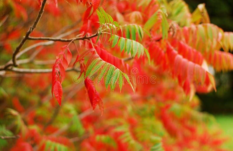 Φύλλα πτώσης στοκ φωτογραφία με δικαίωμα ελεύθερης χρήσης
