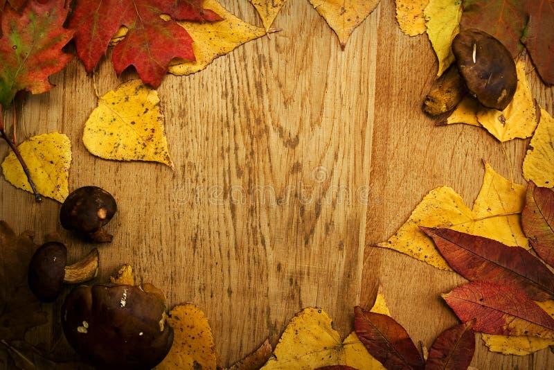 Φύλλα σε ένα χαρτόνι στοκ εικόνες