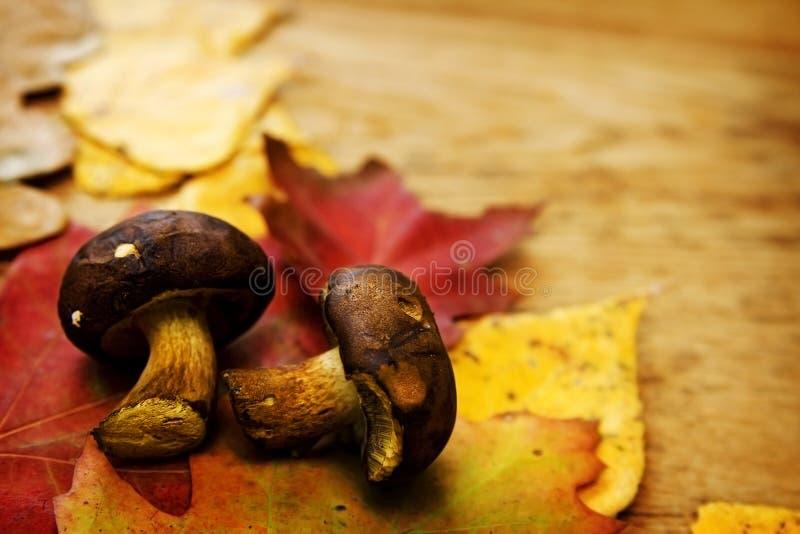 Φύλλα σε ένα χαρτόνι στοκ φωτογραφίες