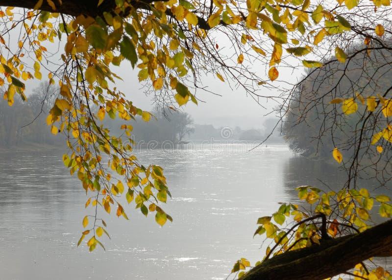 Φύλλα στα χρώματα φθινοπώρου στον ποταμό Elbe στοκ εικόνες