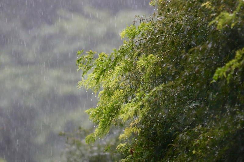 Φύλλα στη βροχή στοκ φωτογραφίες