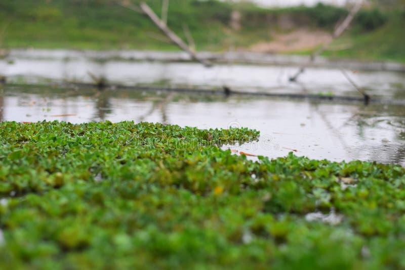 Φύλλα στη λίμνη στοκ εικόνα με δικαίωμα ελεύθερης χρήσης