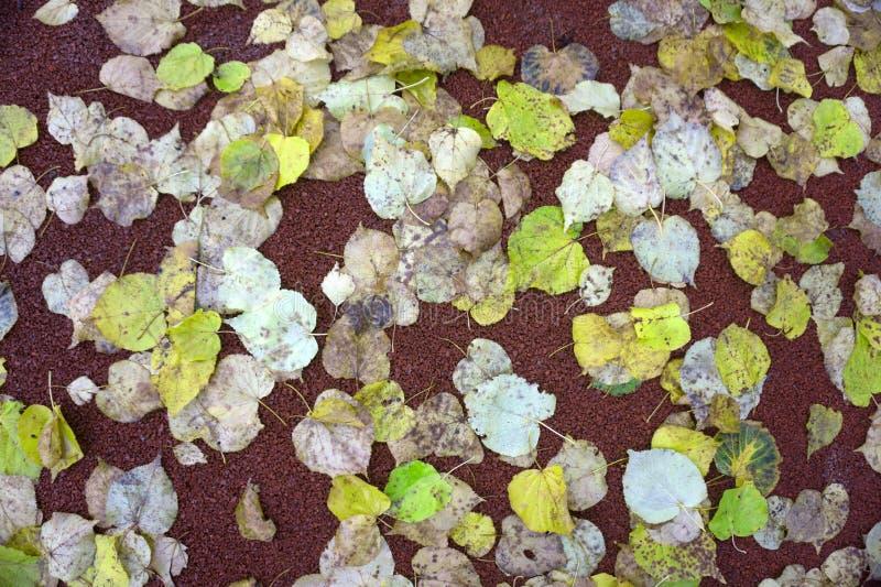 Φύλλα στο πάτωμα ανασκόπηση φθινοπώρου ζω&e στοκ φωτογραφία με δικαίωμα ελεύθερης χρήσης
