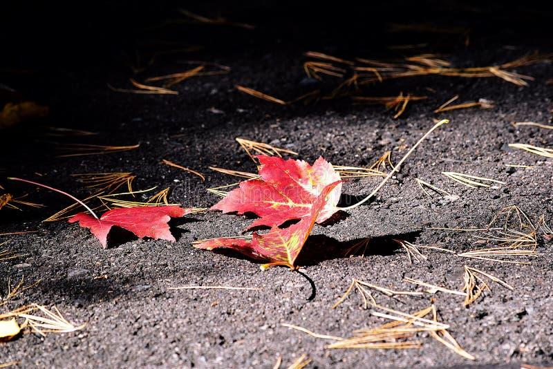 Φύλλα στο blacktop στοκ εικόνα