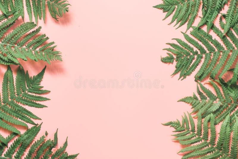 Φύλλα συνόρων της φτέρης στο ροζ κρητιδογραφιών E Θερινό υπόβαθρο στοκ φωτογραφία