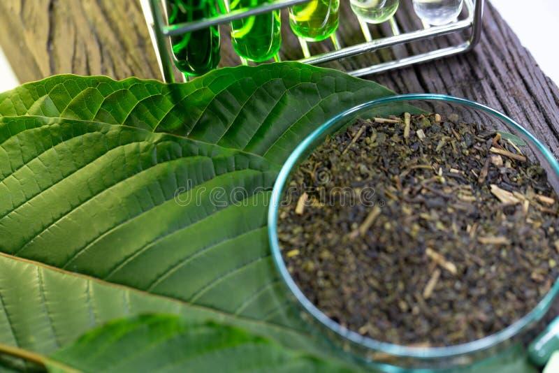 Φύλλα του speciosa Mitragyna kratom και της χημικής ανάλυσης στο εργαστήριο στοκ φωτογραφία