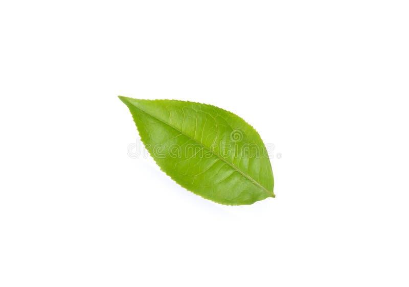 Φύλλα τσαγιού στο άσπρο υπόβαθρο στοκ εικόνα με δικαίωμα ελεύθερης χρήσης