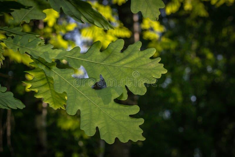 Φύλλα των φυτών σε ένα δάσος κινηματογραφήσεων σε πρώτο πλάνο στοκ εικόνες