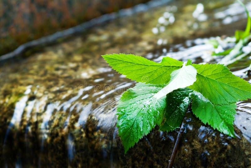 φύλλα υγρά Στοκ Εικόνες
