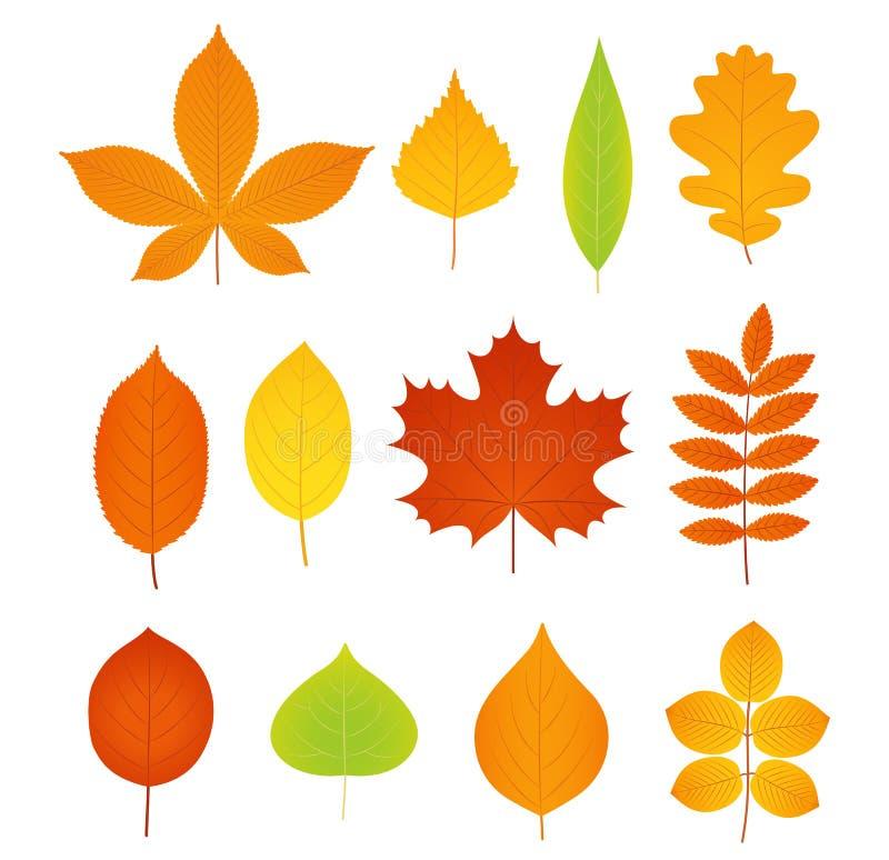 Φύλλα φθινοπώρου διάνυσμα Σύνολο συμβόλων του φύλλου πτώσης ελεύθερη απεικόνιση δικαιώματος