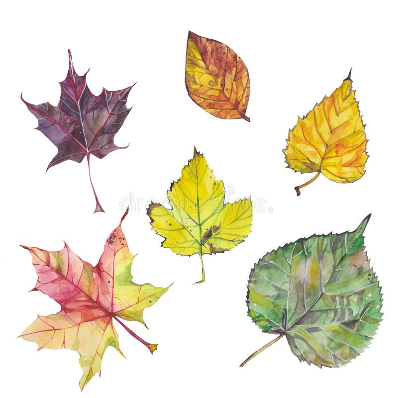 Φύλλα φθινοπώρου που απομονώνονται στο άσπρο backgound Σύνολο Watercolor ελεύθερη απεικόνιση δικαιώματος