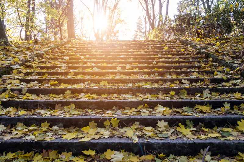 Φύλλα φθινοπώρου σκαλοπατιών στοκ εικόνα με δικαίωμα ελεύθερης χρήσης
