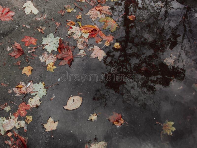 Φύλλα φθινοπώρου στη λακκούβα στοκ φωτογραφία με δικαίωμα ελεύθερης χρήσης