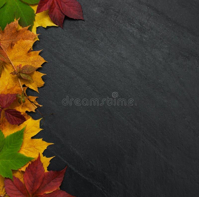 Φύλλα φθινοπώρου στον πίνακα στοκ φωτογραφία