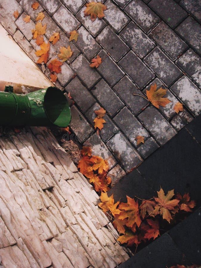 Φύλλα φθινοπώρου στο πεζοδρόμιο στοκ εικόνες