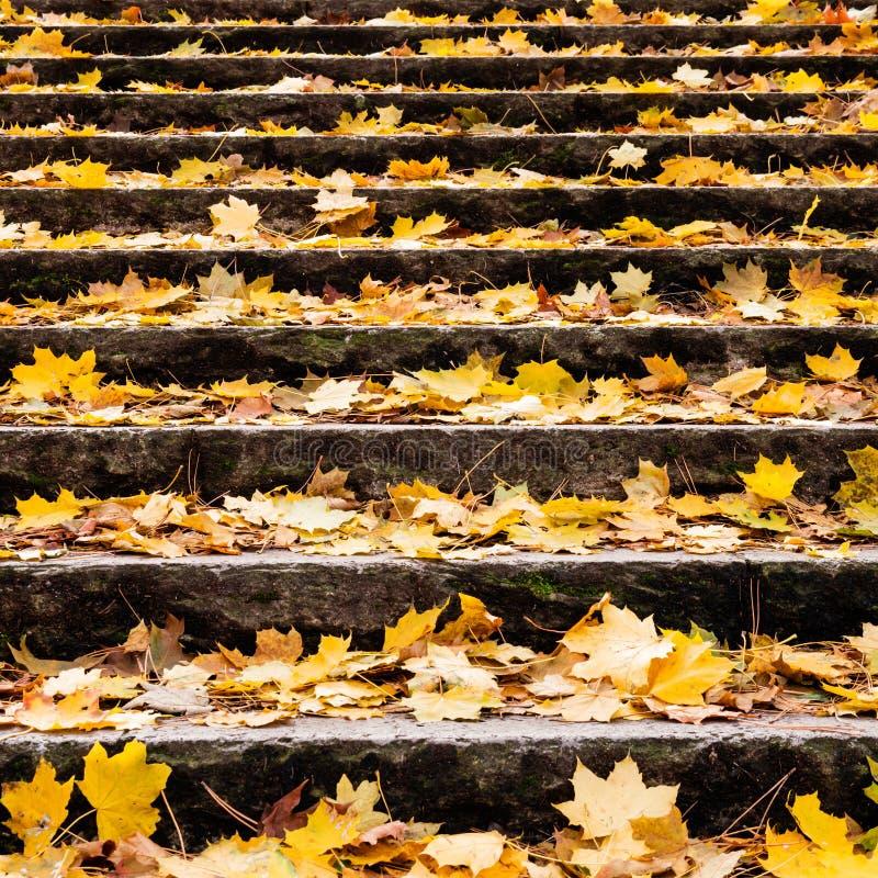Φύλλα φθινοπώρου στο σκαλοπάτι στοκ φωτογραφία με δικαίωμα ελεύθερης χρήσης