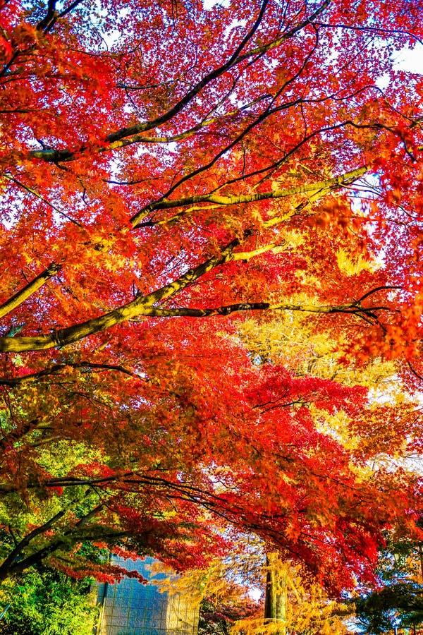 Φύλλα φθινοπώρου του πάρκου Inokashira πάρκων Inokashira στοκ φωτογραφία με δικαίωμα ελεύθερης χρήσης