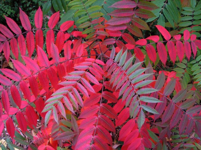 Download φύλλα φθινοπώρου στοκ εικόνα. εικόνα από χρώματα, πτώση - 1530499