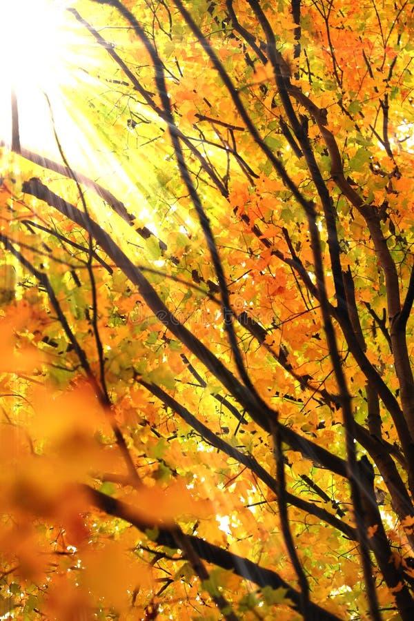 φύλλα φθινοπώρου στοκ φωτογραφία με δικαίωμα ελεύθερης χρήσης