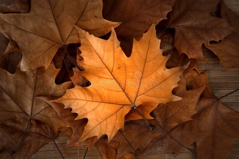 Download φύλλα φθινοπώρου στοκ εικόνα. εικόνα από εποχή, πτώση - 22792891