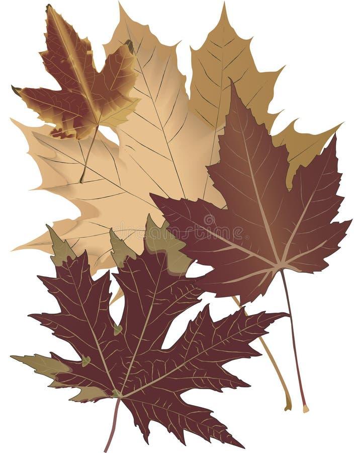 φύλλα φθινοπώρου ελεύθερη απεικόνιση δικαιώματος