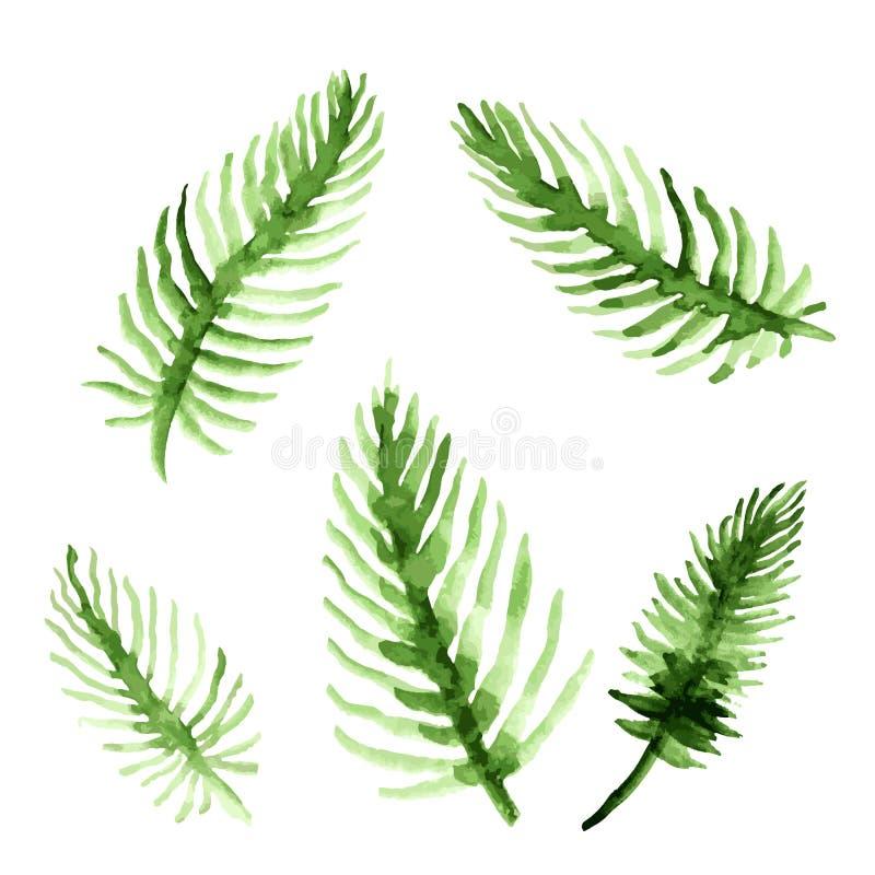 Φύλλα φοινίκων Watercolor καθορισμένα Πράσινη συλλογή φύλλων Διανυσματική απεικόνιση που απομονώνεται στην άσπρη ανασκόπηση απεικόνιση αποθεμάτων