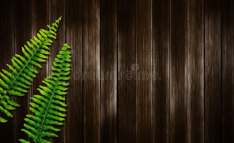 Φύλλα φτερών της Βοστώνης στο ξύλινο υπόβαθρο στοκ φωτογραφίες