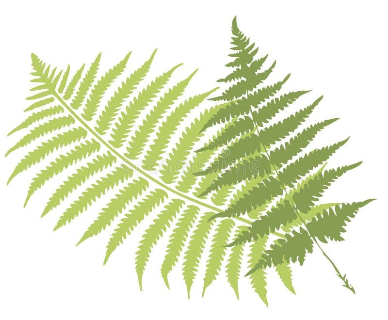 φύλλα φτερών ελεύθερη απεικόνιση δικαιώματος