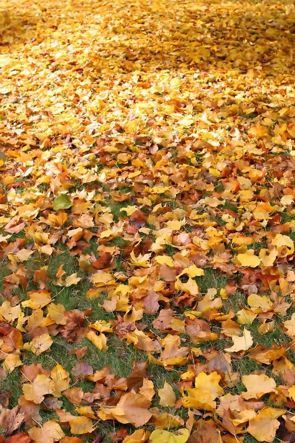 φύλλα χορτοταπήτων στοκ φωτογραφίες