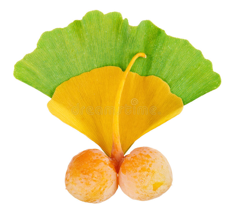 φύλλα ginkgo καρπών biloba πέρα από τον κ στοκ εικόνα