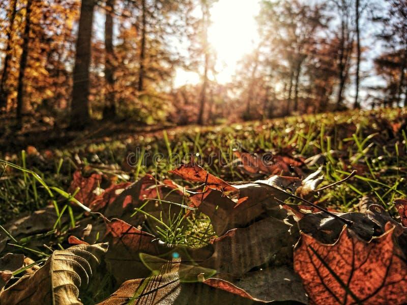 Φύλλα Hdr στοκ φωτογραφία