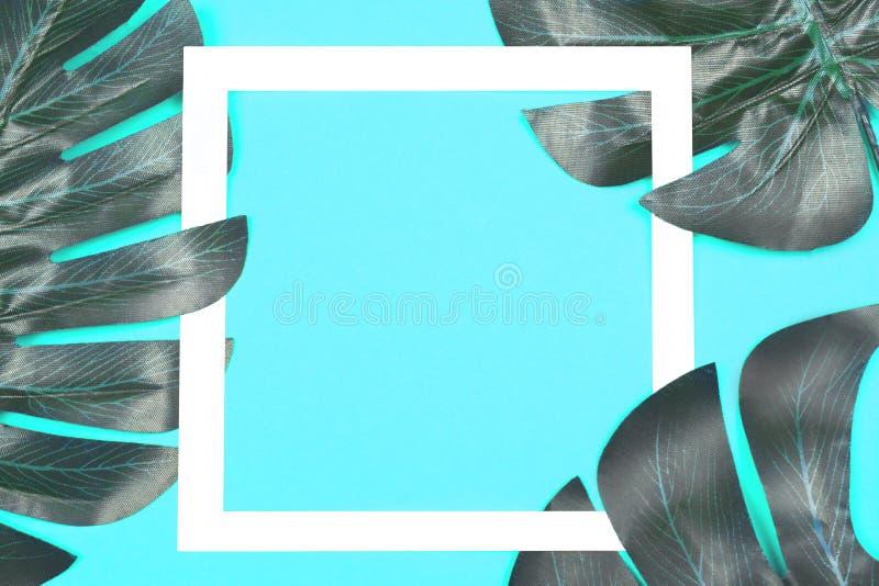 Φύλλα Monstera στο μπλε υπόβαθρο με το πλαίσιο στοκ φωτογραφίες