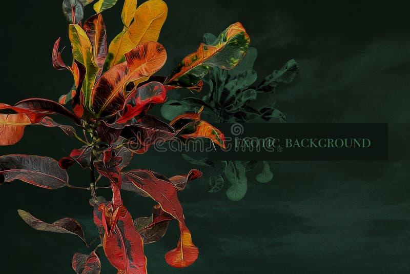 Φύλλα Motley τροπικού φυτού και μέρος για επιγραφή Εξωτικό φόντο στοκ εικόνες με δικαίωμα ελεύθερης χρήσης