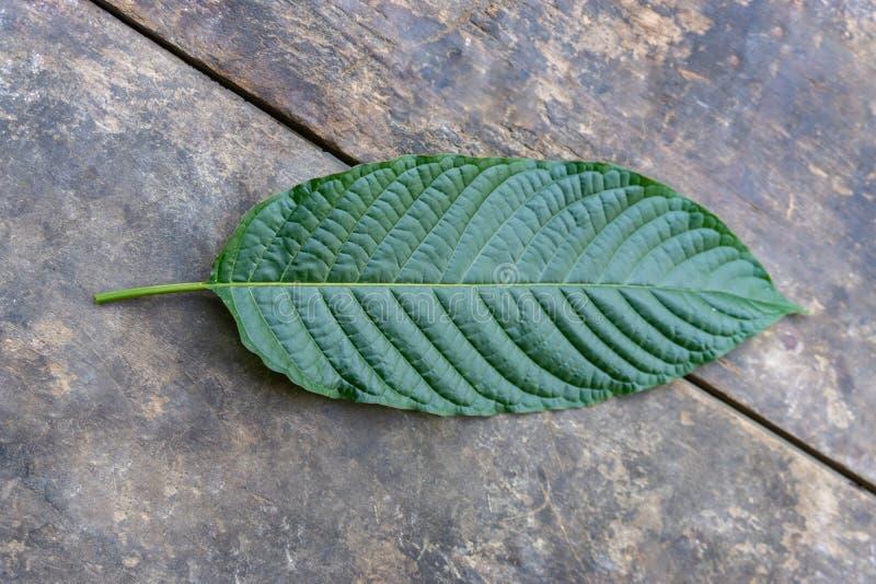 Φύλλα speciosa Mitragyna στο ξύλινο υπόβαθρο, τοπ άποψη στοκ εικόνες με δικαίωμα ελεύθερης χρήσης
