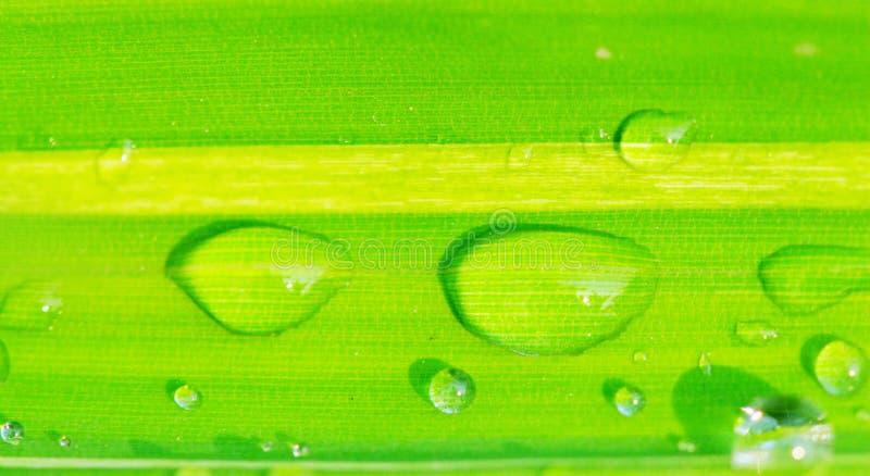 φύλλο δροσιάς στοκ εικόνες με δικαίωμα ελεύθερης χρήσης