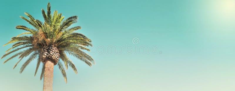 Φύλλο ενός φοίνικα στον ουρανό στοκ φωτογραφία με δικαίωμα ελεύθερης χρήσης
