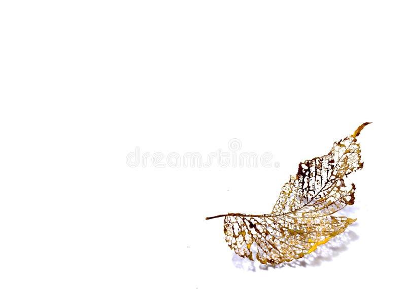 Φύλλο με αφηρημένο μοτίβο στοκ εικόνα με δικαίωμα ελεύθερης χρήσης